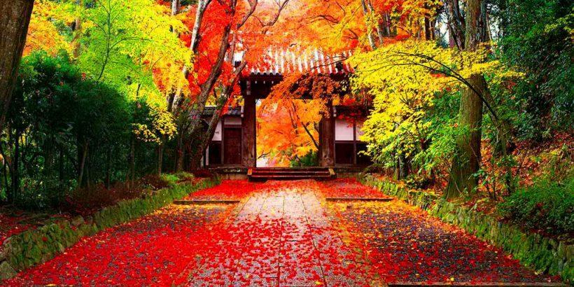 japanese-autumn